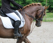 Centre equestre poney club de Champlong